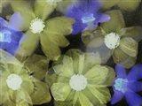 Flores Congeladas 5