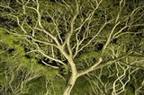 Costa Rica Tree Color 2