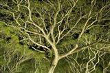 Costa Rica Tree Color 2
