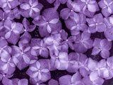 Flores Congeladas 200