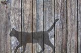 Barn Cat Shadow 5