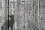 Cat And Mouse Shadow 2