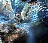Circle Of Life Osprey