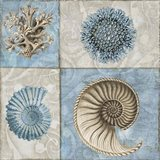 Sea Life VI