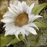 White Sunflower I