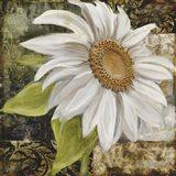 White Sunflower II