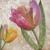 Tulip Tempest I