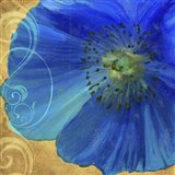 Poppy Blues I