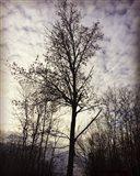 Tree In November