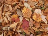 Pile Of Leaves