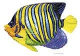 Fish 2 Blue-Yellow