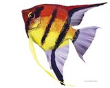 Fish 4 Red-Yellow
