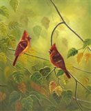 Autumn Cardinals