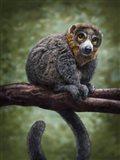 Mongoose Lemur Totem