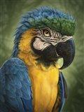 Parrot Totem