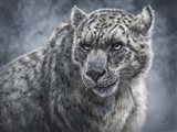 Snow Leopard Totem