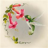 Hummingbirds With Trumpet Flowers 1