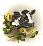 Bull & Sunflowers