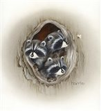 Raccoons In Hole