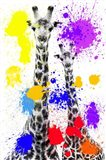 Safari Colors Pop Collection - Giraffes