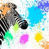 Safari Colors Pop Collection - Zebra