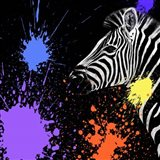 Safari Colors Pop Collection - Zebra II