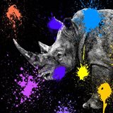 Safari Colors Pop Collection - Rhino Portrait