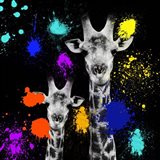 Safari Colors Pop Collection - Giraffes Portrait VI