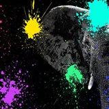 Safari Colors Pop Collection - Elephant Portrait II
