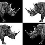 Safari Profile Collection - Rhinos II