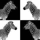 Safari Profile Collection - Zebras II