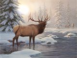 Elk Bugleing