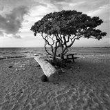 Hawaiian Tree