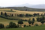 Tuscan Hillside 1