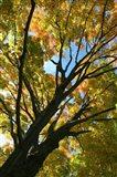 Autumn Maple Vertical