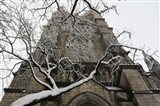 Branch Snow Cathedral 9688