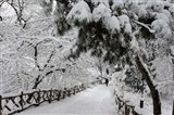 Central Park Path Deep Snow