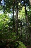 Green Forest Vertical