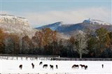 Early Snow Horse Paddock