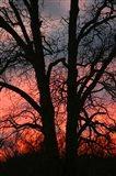 November Sunset Vertical