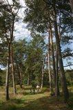 Pine Path Vertical