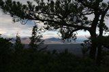 Treeline Pine