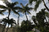 Tropical Trees Rooftops