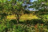 Hobart Meadow