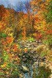 Low Water Brook Autumn