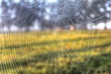 Paddock Web