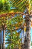 Palms Vertical
