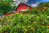 Red Barn And Flowers