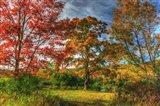Tillson Lake Trees