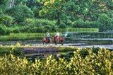 Tillson Pond Riders